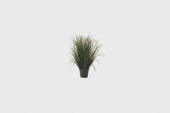 Grass Greens
