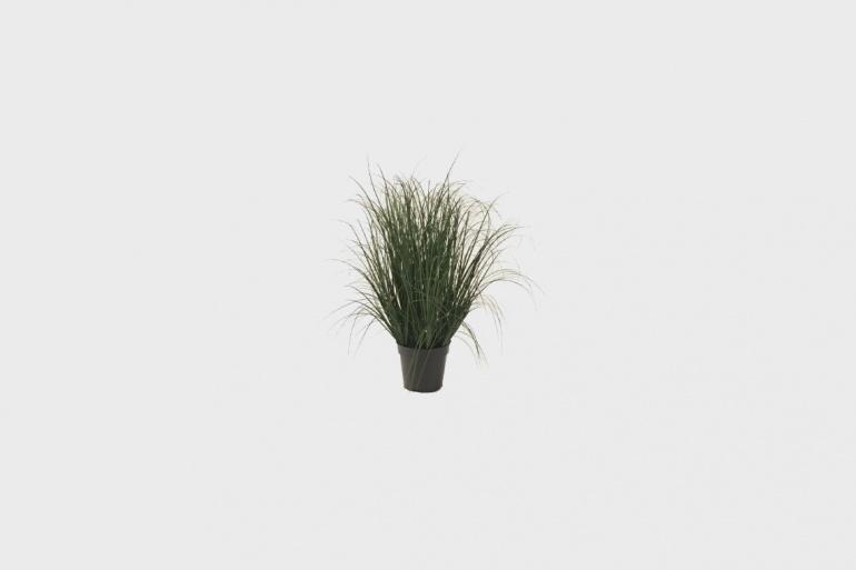 Greens Grass